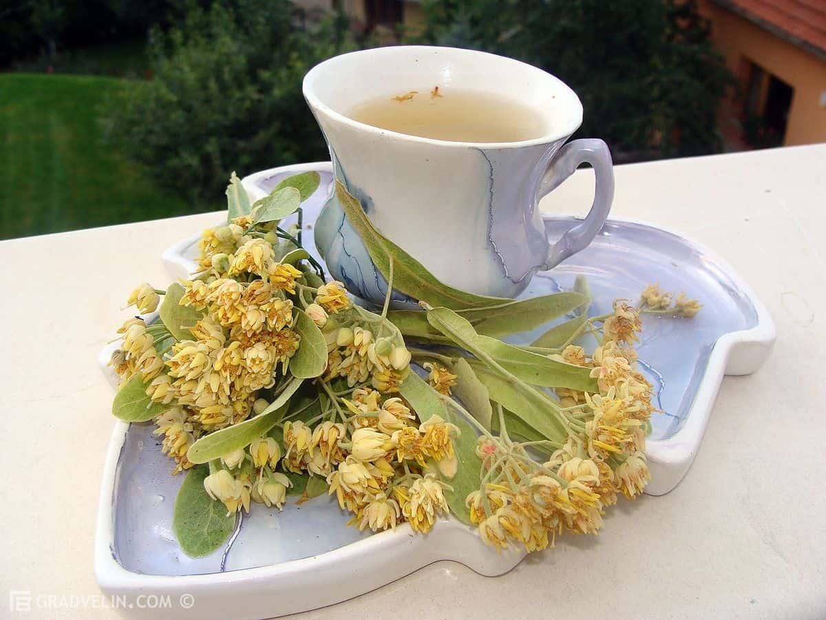 Рецепт липового чая