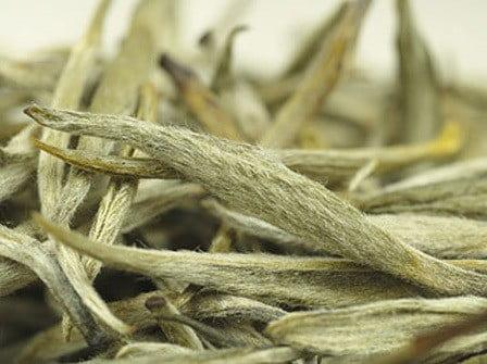 Белый чай. фото листья