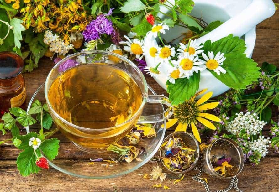 травы для чая фото