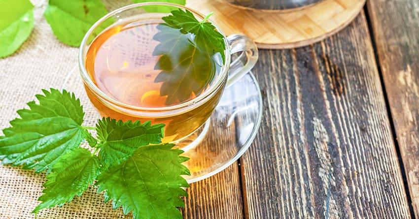 Чай из крапивы рецепт фото