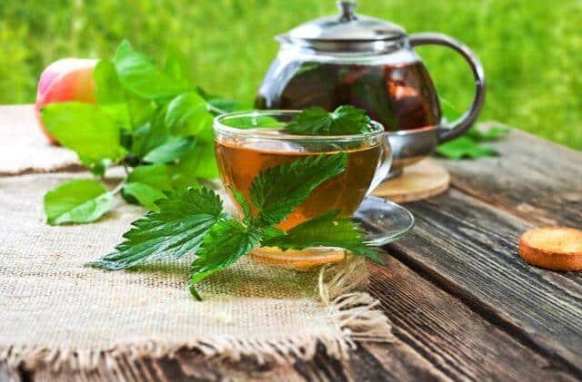 Чай из крапивы свойства фото