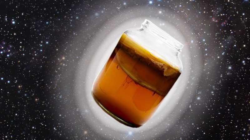 чайный гриб фото