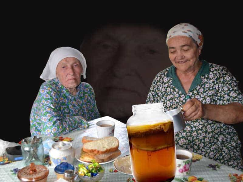 чайный гриб фотография