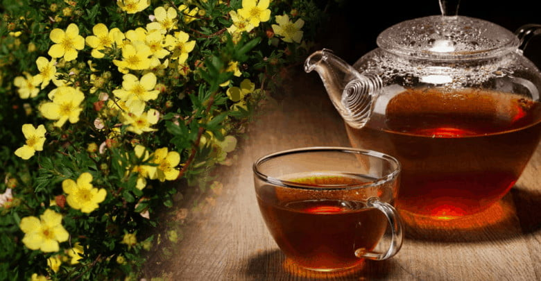курильский чай как пить фото